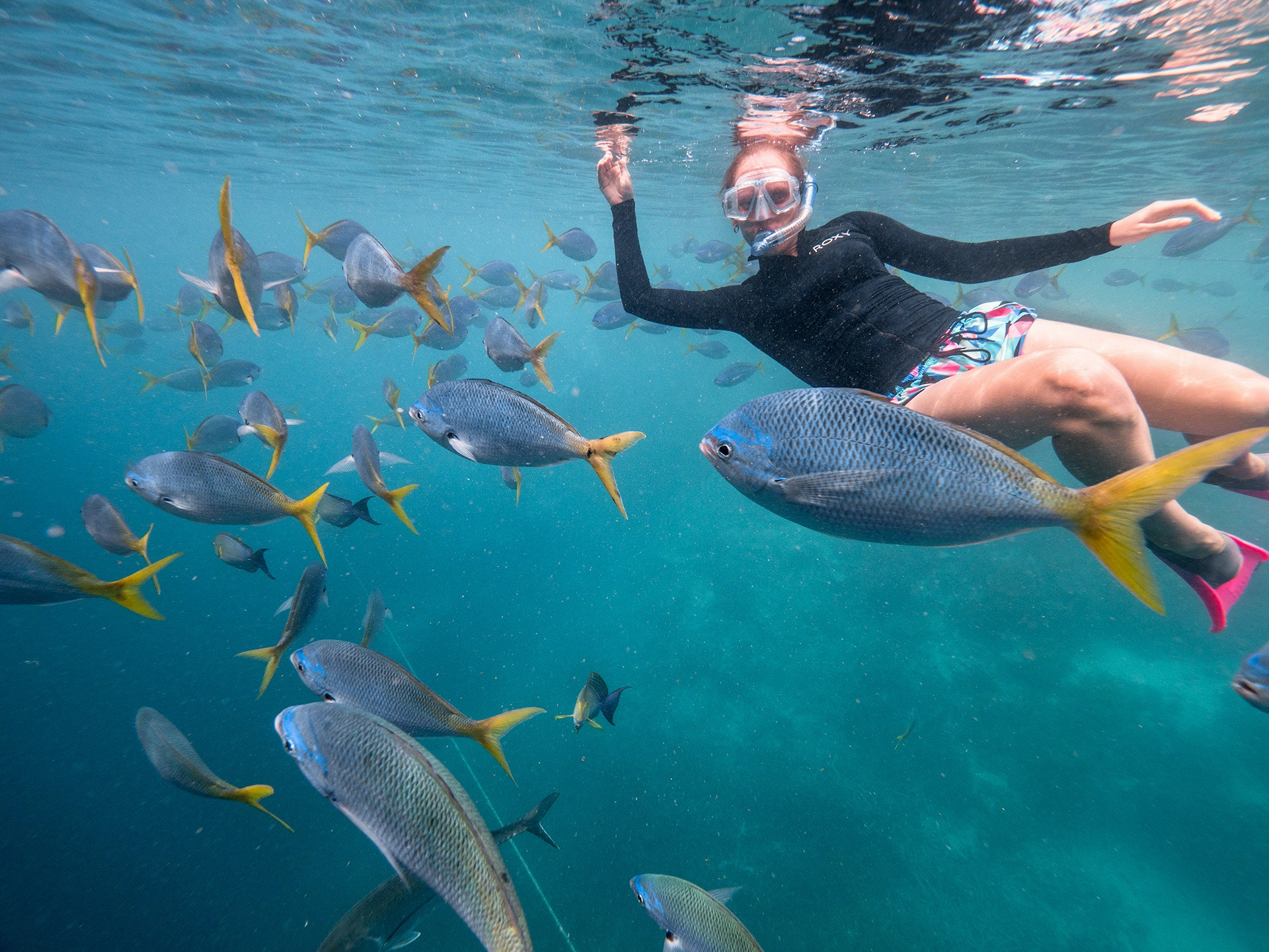 Great Barrier Reef Full Day Adventure - Cruise Whitsundays