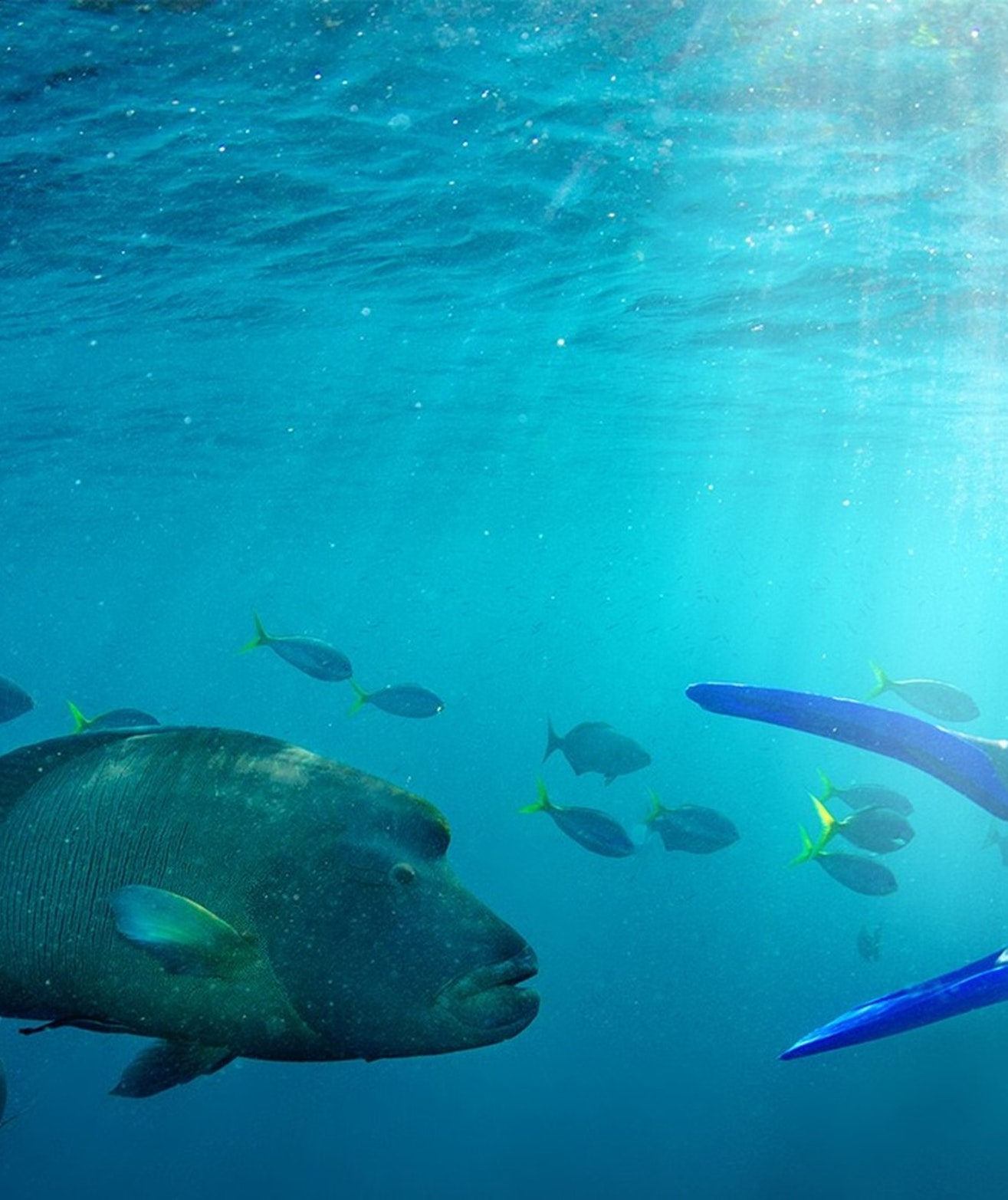 Great Barrier Reef - Cruise Whitsundays
